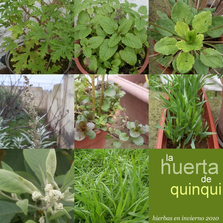 Buscando hierbas medicinales la huerta de quinqui for Tipos de hierbas medicinales